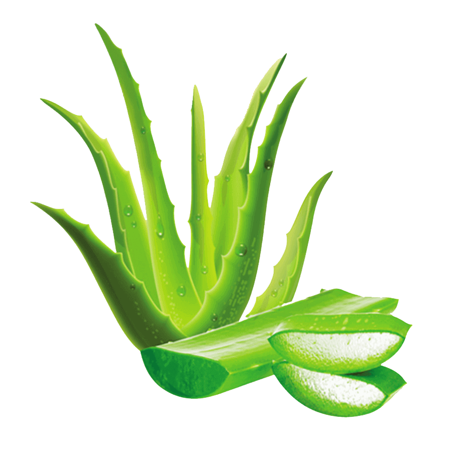 aloevera-is-an-essential-content-of-herbal-daily-aloevera-rose.-best-for-skin-health-joints-health-anti-aging-purify-blood-and-boost-immunity