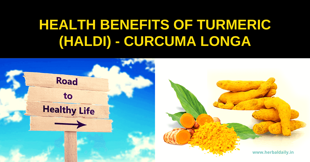 HEALTH-BENEFITS-OF-TURMERIC-HALDI-CURCUMA-LONGA-100-प्राकृतिक-टॉनिक
