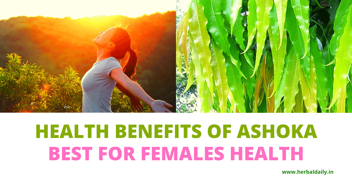 Health-benefits-of-ashoka-best-for-females-health-pcod-pcos-irregular-periods-manustral-periods-fibroids-white-discharge