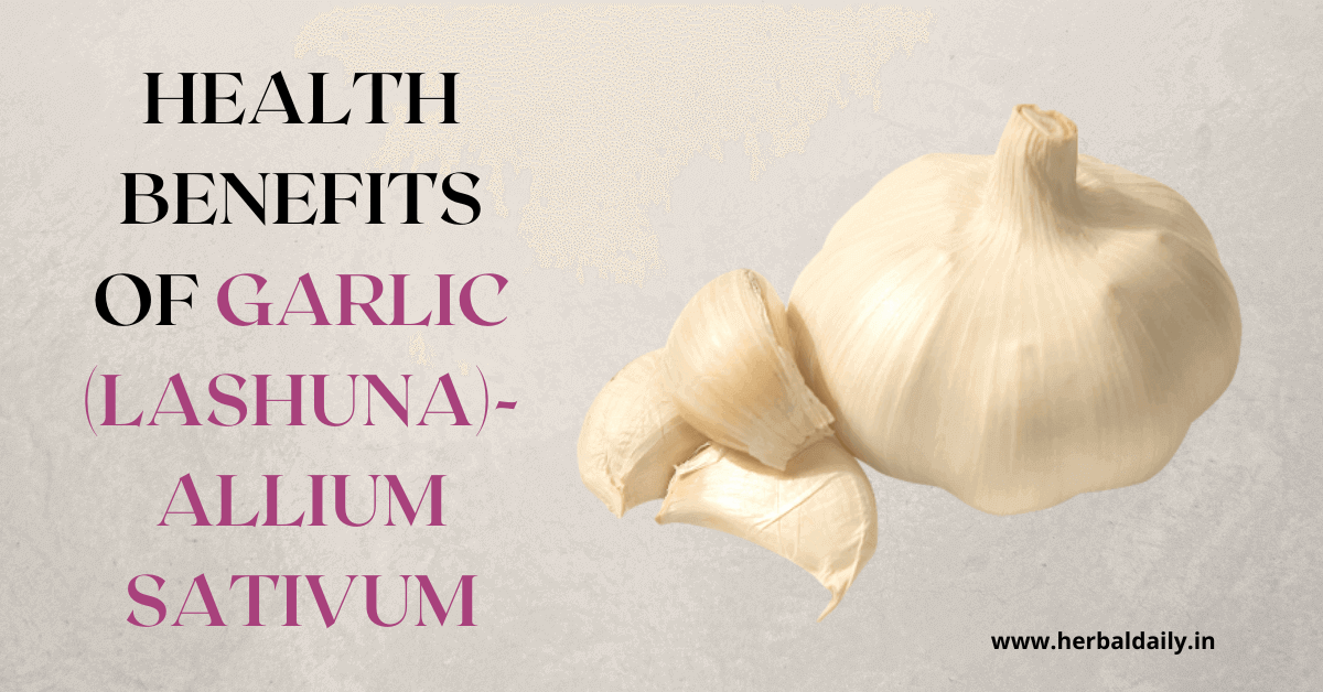 health benefits of garlic, lashuna, allium sativum, Garlic has Antibacterial, and anti cancer properties